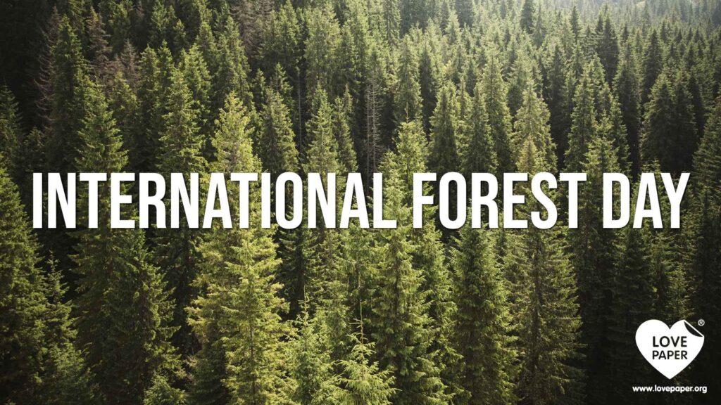 international-forest-day