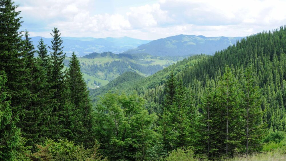 The Facts On European Forest Growth